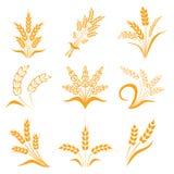 σύμβολα για το σίτο σχεδίου λογότυπων Γεωργία, καλαμπόκι, κριθάρι, μίσχοι, οργανικές εγκαταστάσεις, ψωμί, τρόφιμα, φυσική συγκομι Στοκ εικόνες με δικαίωμα ελεύθερης χρήσης