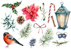Σύμβολα Χριστουγέννων Watercolor καθορισμένα Το χέρι χρωμάτισε τις χειμερινές εγκαταστάσεις, bullfinch πουλί, ντεκόρ που απομονώθ απεικόνιση αποθεμάτων