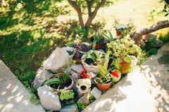 Σύνθεση κήπων Διαφορετικά λουλούδια στα διαφορετικά δοχεία Landsca Στοκ Φωτογραφία