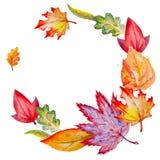 Σύνθεση κύκλων Watercolor με τα φύλλα φθινοπώρου Στοκ Φωτογραφία