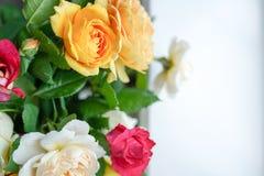 Σύνθεση λουλουδιών των ροδαλών λουλουδιών στο άσπρο υπόβαθρο r στοκ εικόνα με δικαίωμα ελεύθερης χρήσης