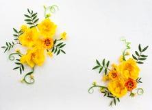 Σύνθεση λουλουδιών Στοκ Φωτογραφίες