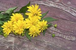 Σύνθεση με τα λουλούδια του κίτρινου χρώματος Στοκ εικόνα με δικαίωμα ελεύθερης χρήσης
