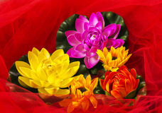 Σύνθεση λουλουδιών με το κόκκινο Tulle στοκ εικόνες