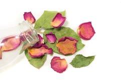 Σύνθεση λουλουδιών των ξηρών ροδαλών λουλουδιών βαλεντίνος ημέρας s Drie Στοκ Εικόνες