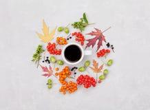 Σύνθεση της κούπας καφέ πρωινού, των φύλλων φθινοπώρου και του μούρου στην ελαφριά υπερυψωμένη άποψη υποβάθρου Το άνετο επίπεδο π Στοκ Εικόνα