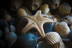 Σύνθεση του αστερία και των θαλασσινών κοχυλιών Στοκ Εικόνα
