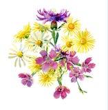 Σύνθεση των άγριων μαργαριτών και των γαρίφαλων λουλουδιών ελεύθερη απεικόνιση δικαιώματος