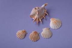 Σύνθεση των θαλασσινών κοχυλιών Στοκ Εικόνα