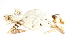 Σύνθεση των διάφορων θαλασσινών κοχυλιών Στοκ Εικόνα