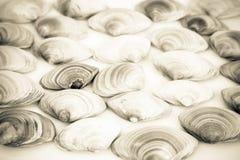 Σύνθεση των διάφορων θαλασσινών κοχυλιών Στοκ φωτογραφίες με δικαίωμα ελεύθερης χρήσης