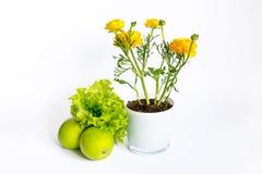 Σύνθεση των κίτρινων λουλουδιών βατραχίων στο δοχείο, πράσινα μήλα Στοκ φωτογραφία με δικαίωμα ελεύθερης χρήσης
