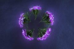 Σύνθεση των λουλουδιών στο φως νέου Στοκ Φωτογραφίες