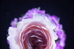 Σύνθεση των λουλουδιών στο φως νέου Στοκ φωτογραφίες με δικαίωμα ελεύθερης χρήσης