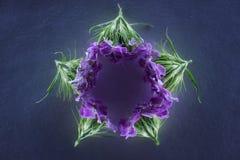 Σύνθεση των λουλουδιών στο φως νέου Στοκ εικόνα με δικαίωμα ελεύθερης χρήσης
