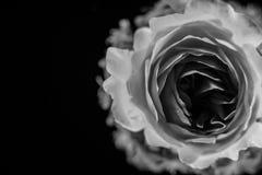 Σύνθεση των λουλουδιών στο φως νέου Στοκ Εικόνες