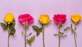 Σύνθεση των τριαντάφυλλων Στοκ φωτογραφίες με δικαίωμα ελεύθερης χρήσης