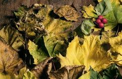 Σύνθεση των φύλλων φθινοπώρου Στοκ φωτογραφία με δικαίωμα ελεύθερης χρήσης