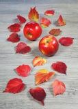 Σύνθεση φθινοπώρου: κόκκινα μήλα και ζωηρόχρωμα φύλλα Στοκ φωτογραφίες με δικαίωμα ελεύθερης χρήσης