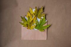 Σύνθεση φθινοπώρου με μια επιστολή και κίτρινα φύλλα σφενδάμου Στοκ Εικόνες