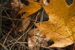 Σύνθεση φθινοπώρου των κίτρινων φύλλων και της χλόης στοκ εικόνα με δικαίωμα ελεύθερης χρήσης