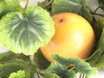 Σύνθεση φρούτων του ώριμου γκρέιπφρουτ Στοκ φωτογραφία με δικαίωμα ελεύθερης χρήσης