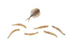 σύνθεση stockfish Στοκ Φωτογραφία