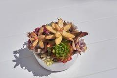 Σύνθεση Succulents σε ένα δοχείο Στοκ φωτογραφίες με δικαίωμα ελεύθερης χρήσης