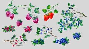 Σύνθεση Watercolor που τίθεται με τα μούρα Στοκ Εικόνα