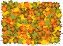 σύνθετα φύλλα φθινοπώρου διανυσματική απεικόνιση