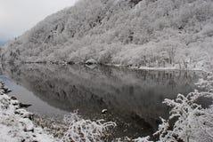 26 σύνθετα ψηφιακά τεράστια χιονώδη δέντρα μεγέθους mpix πανοραμικά βλασταημένα στοκ φωτογραφία