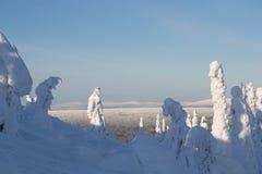 26 σύνθετα ψηφιακά τεράστια χιονώδη δέντρα μεγέθους mpix πανοραμικά βλασταημένα Στοκ Φωτογραφίες