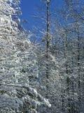 26 σύνθετα ψηφιακά τεράστια χιονώδη δέντρα μεγέθους mpix πανοραμικά βλασταημένα Στοκ εικόνα με δικαίωμα ελεύθερης χρήσης