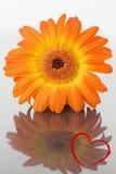 Σύνθετη εικόνα της καρδιάς Στοκ φωτογραφία με δικαίωμα ελεύθερης χρήσης