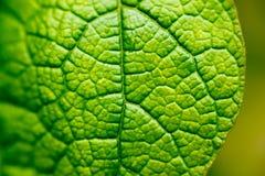 Σύνθετη δομή του φύλλου κάτω από την ενίσχυση Μακροεντολή Στοκ φωτογραφίες με δικαίωμα ελεύθερης χρήσης