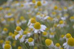 Σύνθετο σώμα λουλουδιών Στοκ εικόνες με δικαίωμα ελεύθερης χρήσης