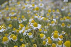 Σύνθετο σώμα λουλουδιών Στοκ φωτογραφίες με δικαίωμα ελεύθερης χρήσης