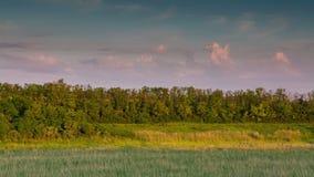 Σύννεφα βραδιού πέρα από τις δασικές περιοχές στη στέπα απόθεμα βίντεο
