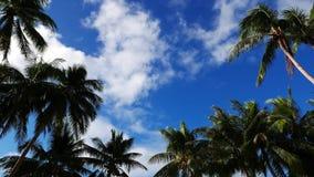 Σύννεφα επάνω από τους φοίνικες απόθεμα βίντεο