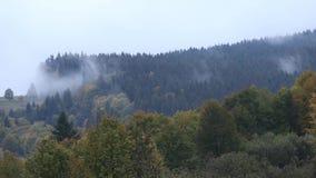 Σύννεφα επάνω από το δάσος απόθεμα βίντεο