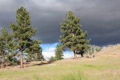 Σύννεφα θύελλας πέρα από τα δέντρα πεύκων Στοκ εικόνα με δικαίωμα ελεύθερης χρήσης