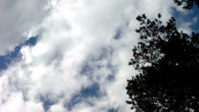 Σύννεφα και δάσος απόθεμα βίντεο