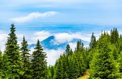 Σύννεφα και καλυμμένη ομίχλη αιχμή βουνών με τα αειθαλή κωνοφόρα μέσα Στοκ Εικόνες