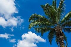 Σύννεφα και φοίνικας Στοκ εικόνες με δικαίωμα ελεύθερης χρήσης