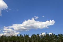 Σύννεφα πέρα από τα δασικά χνουδωτά σύννεφα ενάντια στο μπλε ουρανό στοκ φωτογραφίες με δικαίωμα ελεύθερης χρήσης
