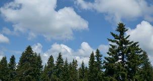 Σύννεφα πέρα από τα κωνοφόρα
