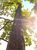 σύννεφα πέρα από το λευκό θερινών δέντρων πάρκων Στοκ φωτογραφία με δικαίωμα ελεύθερης χρήσης