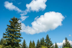 Σύννεφα που ενδιαφέρουν τη μορφή Ερυθρελάτες στο υπόβαθρο του ουρανού Στοκ Φωτογραφία