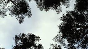 Σύννεφα που κινούνται σε ένα περιβάλλον των υψηλών δέντρων απόθεμα βίντεο