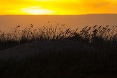 Σύννεφα ροδάκινων πίσω από τους φυσώντας καλάμους αμμόλοφων στο ηλιοβασίλεμα Στοκ Φωτογραφίες